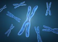 Chromosome X et brins d'ADN illustration stock