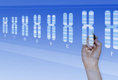 Chromosome genetics research. Chromosome research for biomedical analysis of genetic abnormalities stock photography