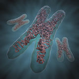 Chromosome X stock illustration