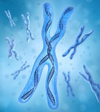 Chromosome x, DNA Strands Stock Photo