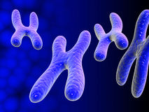 Chromosomes Stock Images