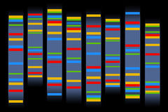 Chromosomes. Colorful gen sequences in chromosomes Stock Photography