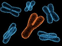 Chromosomes Royalty Free Stock Photo