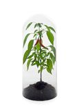 chronić roślinnych Zdjęcie Stock
