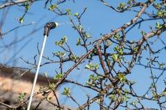 Chronienie jabłoń od fungal choroby lub robactwo ciśnieniową natryskownicą z substancjami chemicznymi zdjęcie royalty free