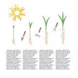Chronologie infographic de planter le processus d'arbre Photos libres de droits