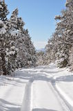 Chrupiący zima ranek na wiejskiej drodze Obrazy Royalty Free