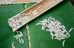 Chrysalis från bambu arkivfoto