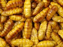 Chrysalis Larval Royalty Free Stock Images