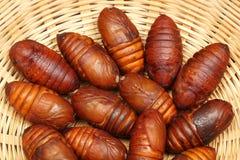 Free Chrysalis Silkworm Stock Photo - 28474900