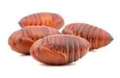 Chrysalis silkworm ,silk worm cocoon Stock Image