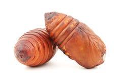 Chrysalis silkworm ,silk worm cocoon Royalty Free Stock Image