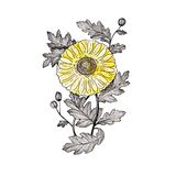 Chrysant 2 royalty-vrije stock foto