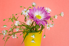 Chrysant met witte bloemen Royalty-vrije Stock Afbeelding