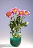 Chrysantemum bouquet Royalty Free Stock Photos