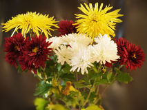 Chrysantemum bouquet Stock Photography