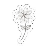Chrysantemum flower decoration cut line Royalty Free Stock Photography