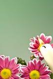 Chrysantemum flowers Stock Photo
