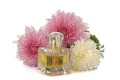 Chrysanten en een fles parfum op een witte achtergrond De bloemen van de herfst Vector vakantiekaart royalty-vrije stock afbeelding