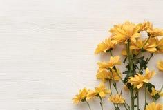 Chrysantenbloem op witte achtergrond met exemplaarruimte Stock Fotografie