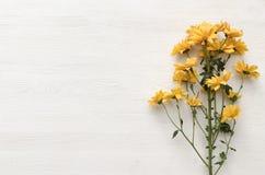 Chrysantenbloem op witte achtergrond met exemplaarruimte Stock Afbeelding