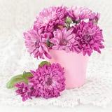 Chrysantenbloemen royalty-vrije stock afbeeldingen