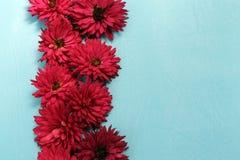Chrysantenbloemen, op een blauwe oppervlakte prachtig op een rij worden geschikt die royalty-vrije stock foto
