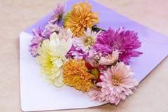 Chrysantenbloemen in violette envelop Stock Afbeelding