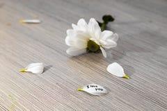 Chrysanthème blanc avec pétales déchirés, l'inscription - je t'aime Photo libre de droits