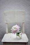 Chrysanthème dans un verre sur une chaise blanche Photos libres de droits