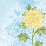 Chrysanthème de fleur Photo libre de droits
