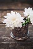 Chrysanthème de fleurs blanches dans la cuvette Image libre de droits
