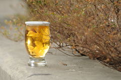 Chrysanthème de saké Image libre de droits