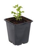 Jeunes plantes Image libre de droits