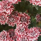 Chrysanthème rouge pendant l'hiver sous la neige photo libre de droits
