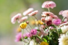 Chrysanthème sur le fond abstrait de calme de ressort Photographie stock