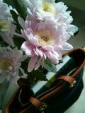 Chrysanthèmes, sac et livre image libre de droits