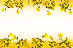 Chrysanthabloemen van kadertabebuia royalty-vrije stock afbeeldingen