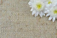 Chrysanthema на связанной экстренныйым выпуском ткани таблицы Стоковое Изображение