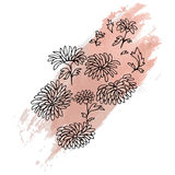 Chrysanthema Hand drawn sketched  illustration. Flower Doodle Flourish graphic with ornate pattern Royalty Free Stock Images