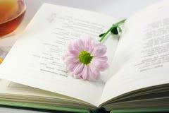 Chrysantheme auf geöffnetem Buch stockfotografie