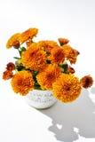 Chrysantheme blüht in einem dekorativen Topf auf einem weißen Hintergrund Lizenzfreie Stockbilder