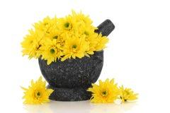 Chrysantheme-Blumen lizenzfreies stockfoto