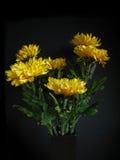 Chrysanthemeblumen Lizenzfreie Stockfotos