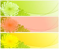 Chrysanthemen. Lizenzfreies Stockfoto