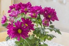 chrysanthemen lizenzfreie stockfotografie