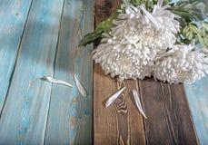 Chrysanthemen auf dem Tisch Stockbilder