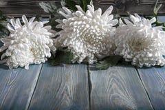 Chrysanthemen auf dem Tisch Lizenzfreie Stockfotografie