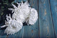 Chrysanthemen auf dem Tisch Stockfoto