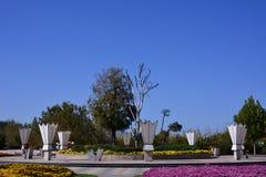 Chrysanthemen-Ausstellungs-Landschaft Stockbilder